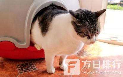 猫咪猫砂盆可以两只公用吗 两个猫砂盆可以放在一起吗