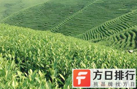 安吉白茶没有生产日期能喝吗 安吉白茶是不是越久越好