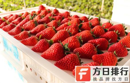 丹东草莓是反季水果吗 丹东草莓是牛奶草莓吗