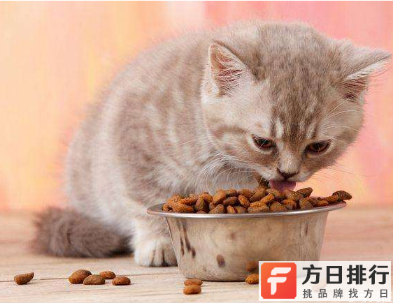 小猫换粮拉稀有事吗 给小猫换粮要注意什么