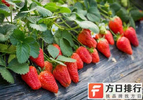 草莓红的不均匀还能吃吗 草莓红的不均匀是怎么回事儿