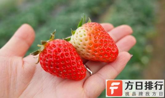 草莓可以放在暖气房吗 草莓在暖气下可以过夜一晚吗