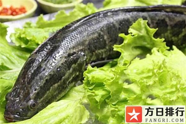 黑鱼是入侵物种吗 黑鱼是海鱼还是淡水