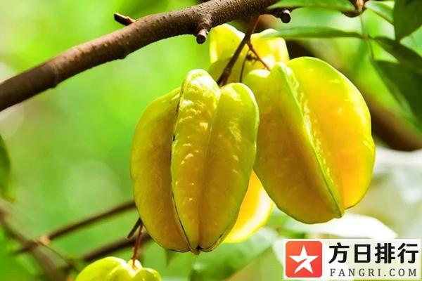 杨桃不宜跟什么一起吃 杨桃能和酸奶一起吃吗