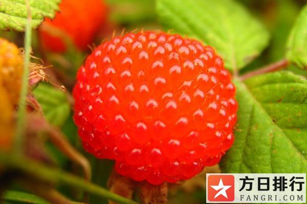 树莓是什么味道 树莓是几月份成熟