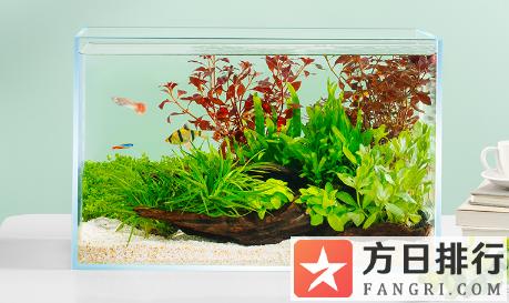 亚克力鱼缸盖怎么防止变形 亚克力鱼缸太易脏了怎么清理